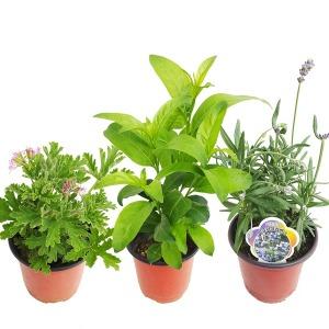 모기퇴치식물1+1+1고르기/구문초/식충식물/허브18종