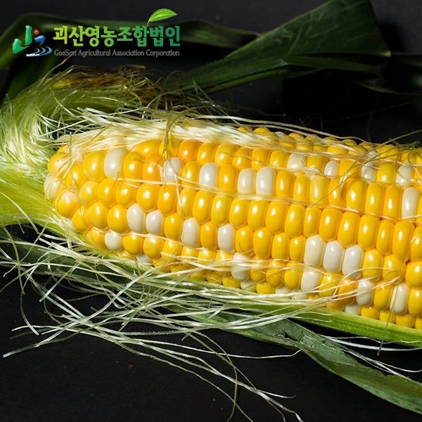 괴산영농조합 정품 괴산대학찰옥수수  미백찰옥수수