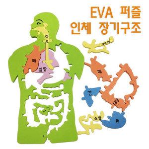 EVA 인체 장기구조 퍼즐/ 실험 수업