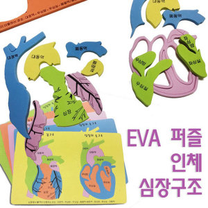 EVA 인체 심장구조 퍼즐/과학 실험 수업