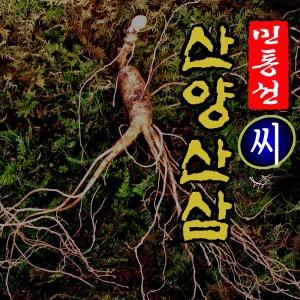 DMZ 민통선 씨 산양삼 10년근 2뿌리 /12년근 2뿌리
