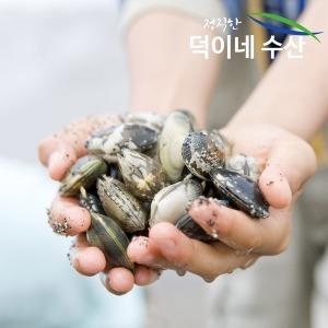 100% 국내산 남해안 왕 바지락 1K /2개 구매시 사은품