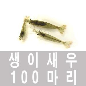 생이새우 100 마리 /체리새우