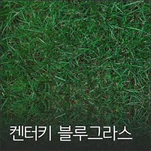 켄터키 블루그라스 1kg 잔디씨 잔디씨앗