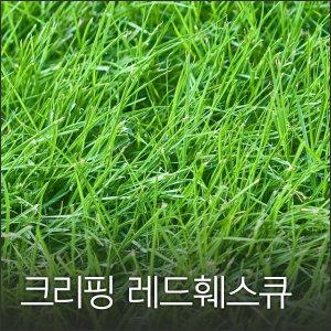 크리핑 레드훼스큐 1kg 잔디씨 잔디씨앗