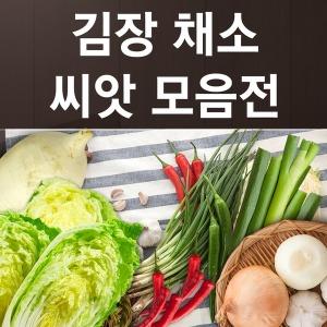 김장배추 무 채소 씨앗 모음
