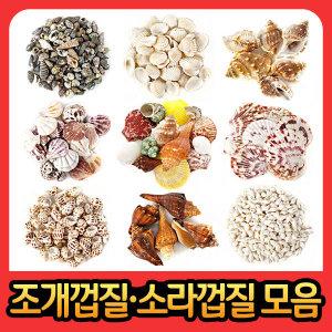 다양한조개껍질모음전 소라 가리비 껍데기 종류선택