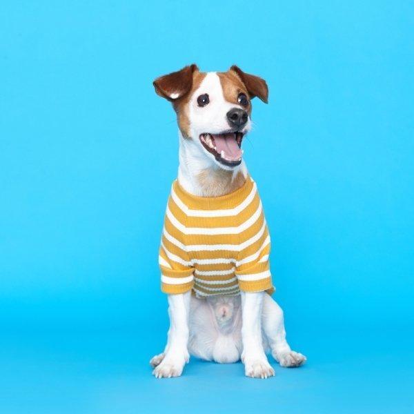 플로트 스트라이프 골지 티셔츠 강아지옷 옐로우