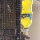 오리 병아리 닭 패트병 급수기 물통 닙플 니플