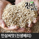 금산 진생베리 인삼씨 인삼씨앗 200g