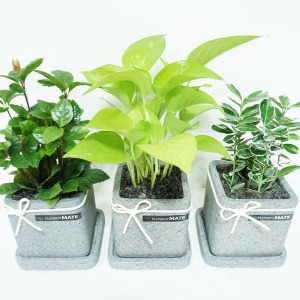 Flower Mate)공기정화식물/모기퇴치/다육/꽃식물