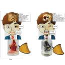 금연교육용품-폐비교 모형(정상폐흡연폐)남자캐릭터