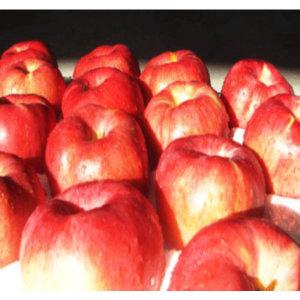 정원농산 껍찔째먹는사과 10kg마른기스(24과~34내외)