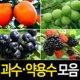 (순희농장)유실수/약용수/과일나무/포트/