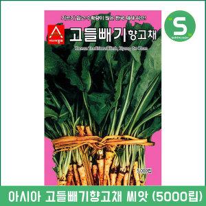고들빼기씨앗 5000립 고들빼기향고채 허브씨앗