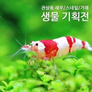 HOT 관상어 새우 어항 모음/가재/크랩/생물/쉬림프