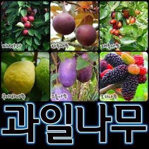 순희농장/대추나무/청매실나무/배나무/호두나무/과일