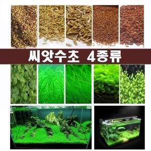 씨앗수초/수초씨앗/수초/전경수초/4종 최저가