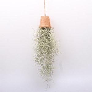 먼지먹는 식물 수염 틸란드시아 먼지먹는 공기정화식물