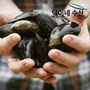 100% 국내산 남해안 싱싱 홍합 2Kg 특가판매
