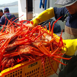 속초홍게 붉은대게 고급형 4kg 산지직송 싱싱한 홍게