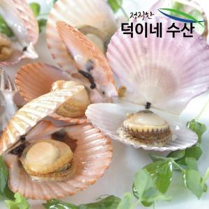 100% 국내산 남해안 싱싱 가리비 2K 최상품 특가판매
