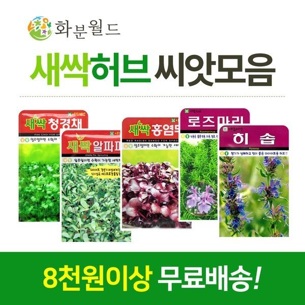 허브씨앗 모음전 꽃씨(8천무배) 로즈마리 라벤더
