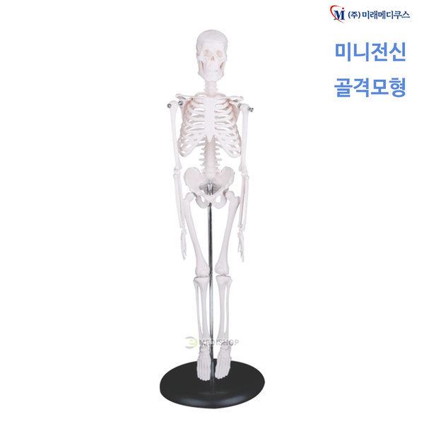 미니골격모형 XC-103 4D아나토미 인체 뼈 해골모형