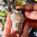 바다의 우유  싱싱한 통영 중대굴 1kg