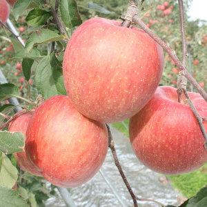 경북산 주스용 사과 착즙용 사과 10kg 무료배송