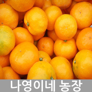 나영이네농장 맛좋은 감귤 10kg(S)-고당도 프리미엄