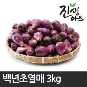 제주도 백년초 백년초열매 3kg