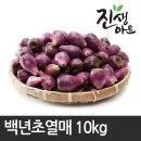 제주도 백년초 백년초열매 10kg