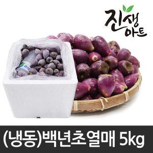 제주도 백년초 백년초열매 냉동백년초 5kg