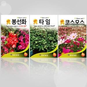 씨앗모음 꽃 씨앗 꽃씨 허브 야생화 봉선화 코스모스