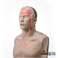 심폐소생술마네킹-CPR 인체모형(혈행표시) 연습마네킨