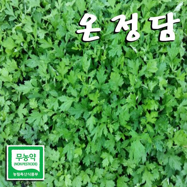 친환경 냉동쑥 (쑥국/쑥떡)생쑥/햇쑥/봄나물/온정담