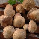 기차마을곡성 옥과농원 송화버섯 1kg(실속형)
