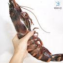킹타이거새우 킹 블랙타이거새우 1kg 3미