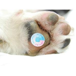 강아지 고양이 스트레스 테스트패치(4개)