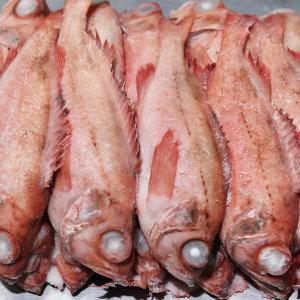 적어 빨간고기 열기 장문볼락 27cm전후 24마리 1팬