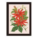 도레미그림 올댓프레임-식물 (Tacsonia Buchanani)