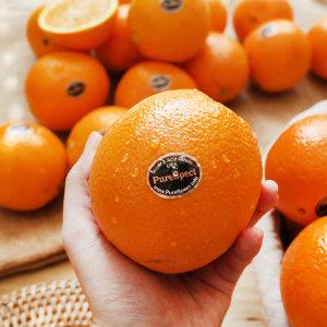 퓨어스펙 고당도 오렌지 중소 22과/2개구매시+6과