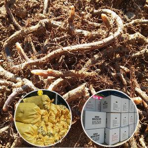 고사리종근 박스 22키로 무료배송 우량품종 먹고사리