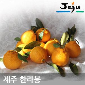 나영이네농장 꿀 한라봉5kg(18~24과)중대과-실량4.5kg