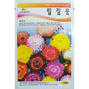 밀집꽃/야생화/중앙종묘/꽃씨 밀집꽃