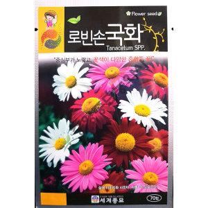 로빈손국화/야생화/중앙종묘/꽃씨 로빈손국화