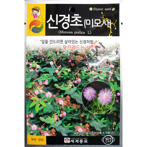 신경초/야생화/중앙종묘/꽃씨 신경초