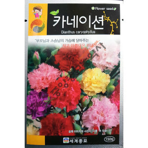 카네이션/야생화/중앙종묘/꽃씨 카네이션