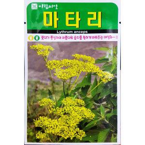마타리/야생화/중앙종묘/꽃씨 마타리 1500립